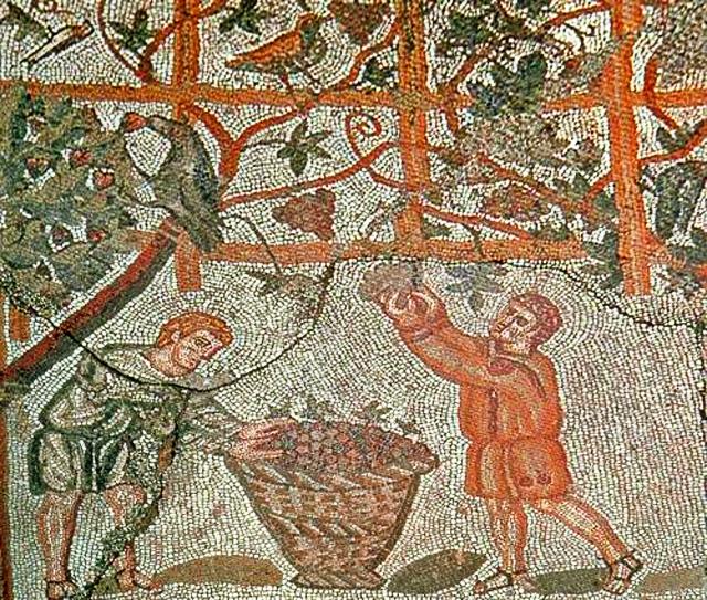 vendemmia antica roma mosaico
